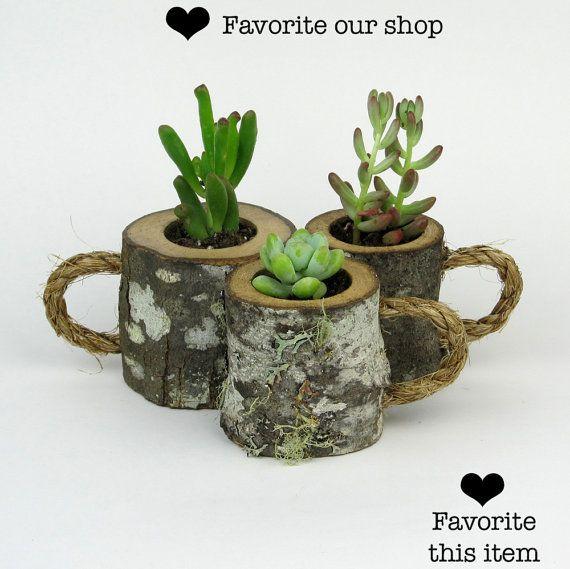 3 jardineras suculentas rústico café tazas registro plantador