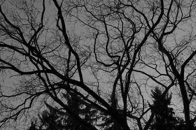 Photographer: Melissa Ann McLaughlin Location: Arboretum in Ann Arbor, MI Found at: readingisescaping.wixsite.com/mel-ann-mclaughlin/photography