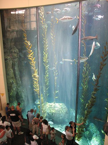 Aquarium of the Pacific in Long Beach $29 per person