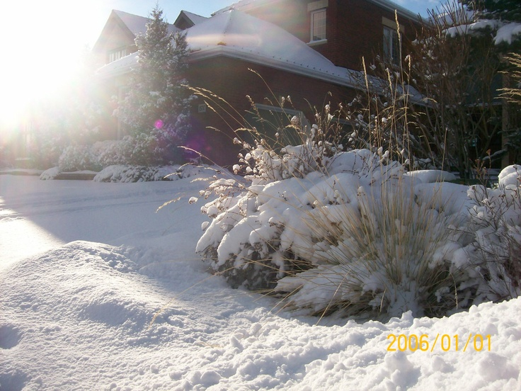 50 best ornamental grasses images on pinterest landscape design this lively garden bed in the summer takes on a new look in the winter the shrubs and ornamental grasses steal the scene under a blanket of snow in the workwithnaturefo