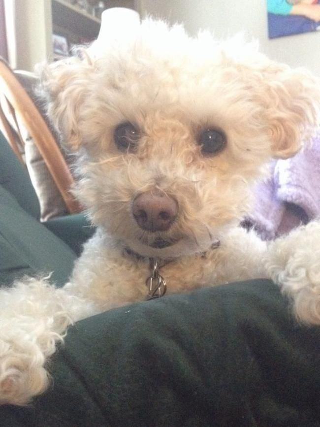 House/Pet sitter needed for friendly, relatively low maintenance maltipoo (? - rescue dog, may be a bichonpoo).  House Sitter Needed  Worcester, Central Mass, Sturbridge   Worcester,Massachusetts United States  Jun 29,2014 For 3 weeks | Short Term Not a member? Join today to contact homeowner DogLoverMA We need a house and petsitter from June 29 or July 1 through July 21. The end date is flexible, and the sitter(s) is welcome to stay longer (we have ample guest space).