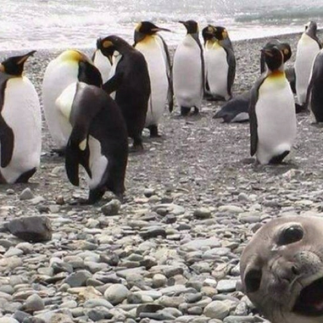 Well hello there! xD #funnypics #funnyimages