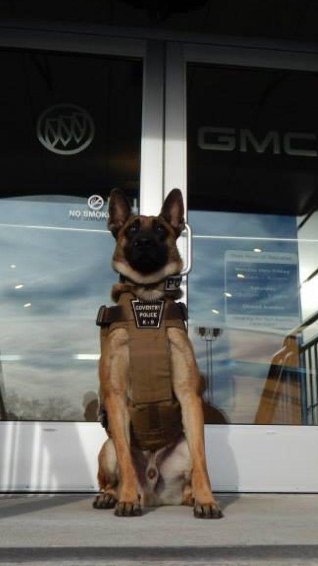 K9 police dog with bullet proof vest