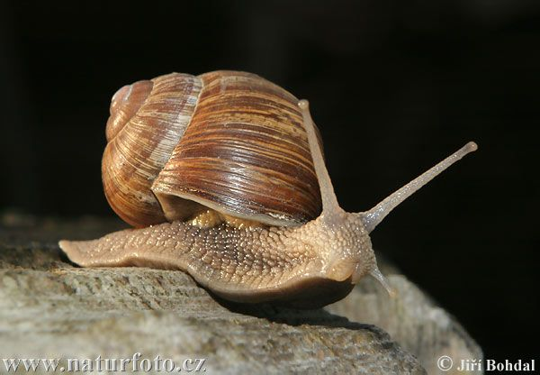 We always played with the snails at my grandparents' house.