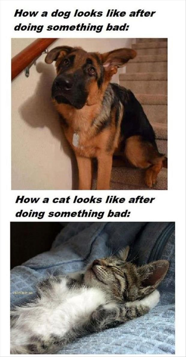 This Is So True! Dogs Feel So Bad, But Cats Feel So Proud Of Themselves - Click for More...