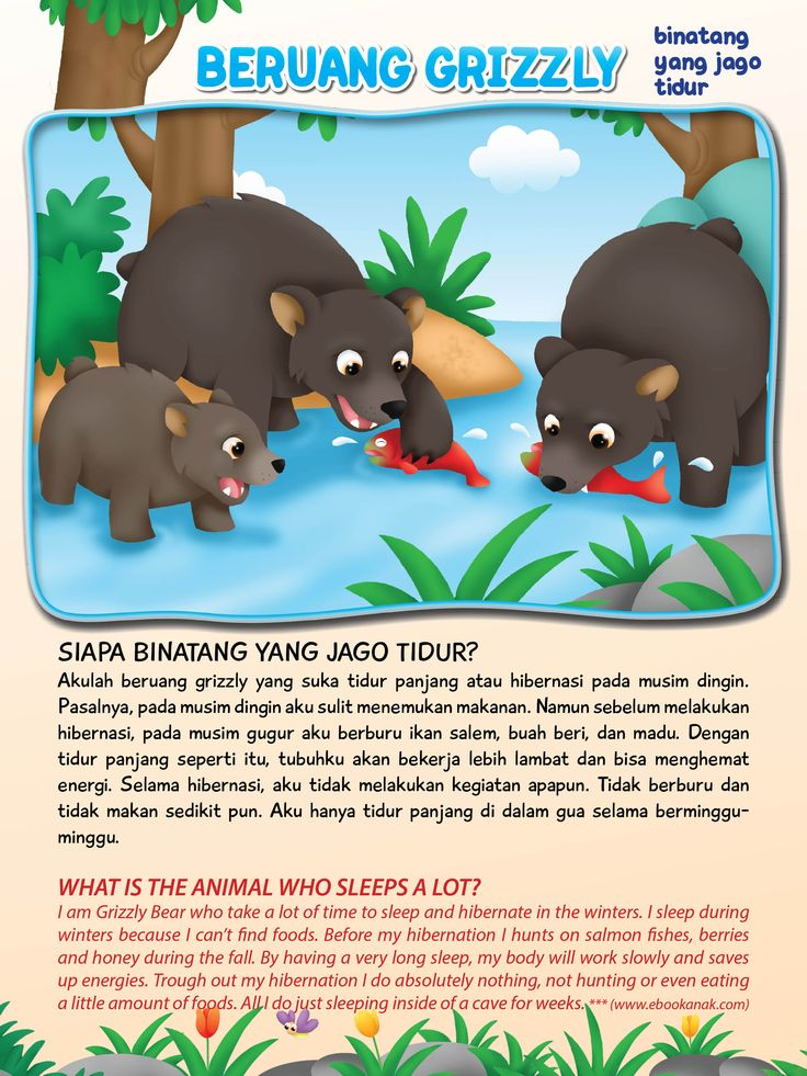 Beruang Grizzly Si Jago Tidur | Ebook Anak