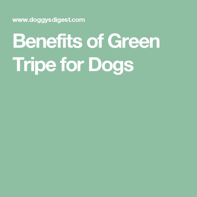 Benefits of Green Tripe for Dogs