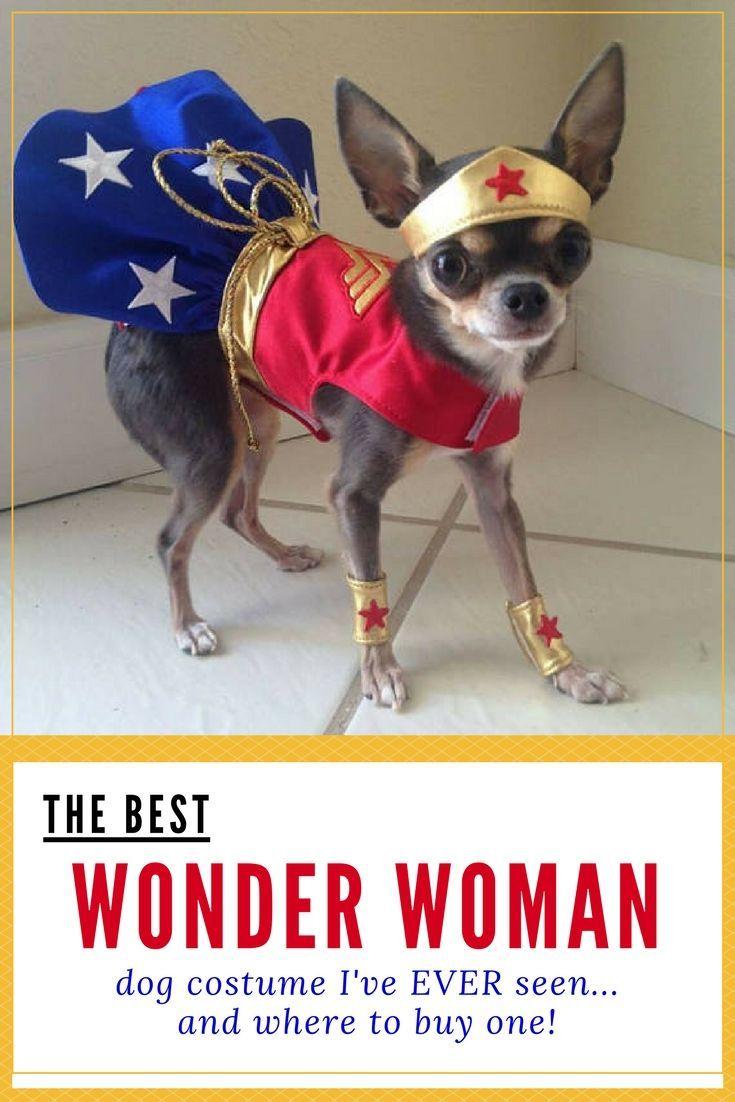 Mitzi Needs This Wonder Woman Dog Costume Tinybutmighty