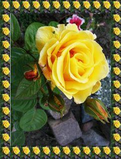 Babcia radzi coś...: Co postawi kwiaty na nogi