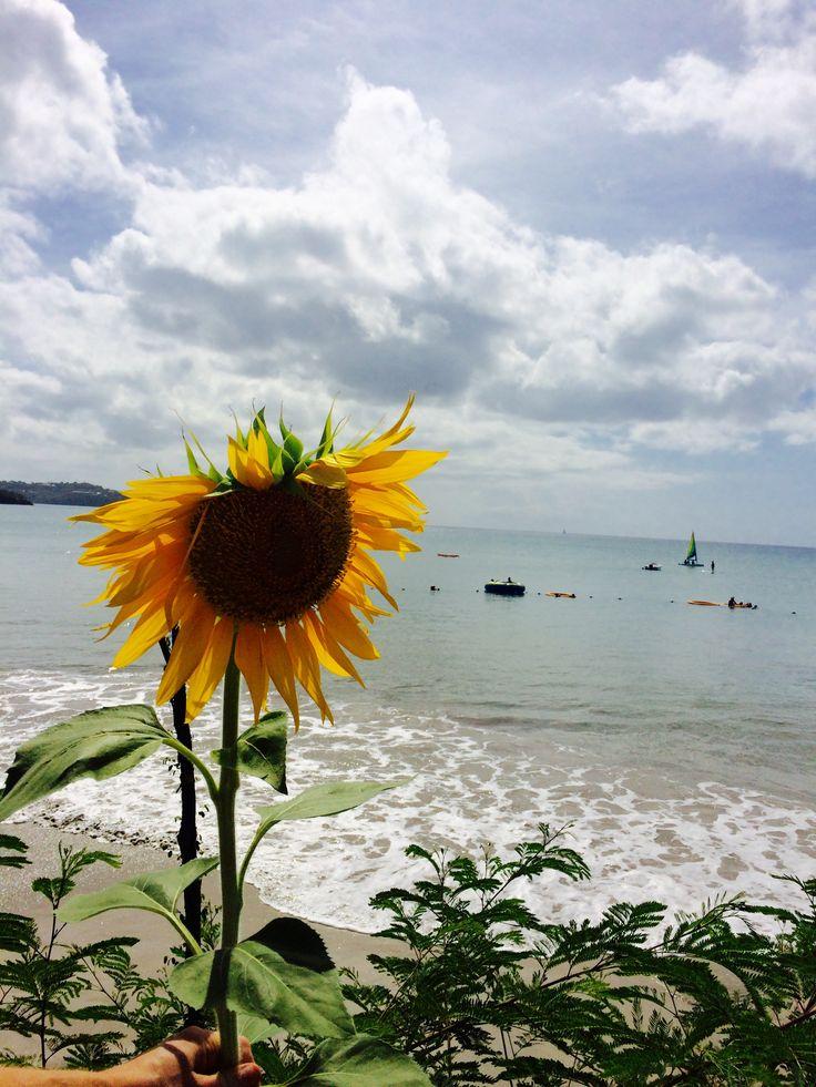 sunflower, beach, travel