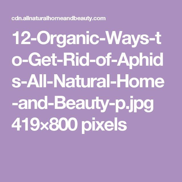 12-Organic-Ways-to-Get-Rid-of-Aphids-All-Natural-Home-and-Beauty-p.jpg 419×800 pixels