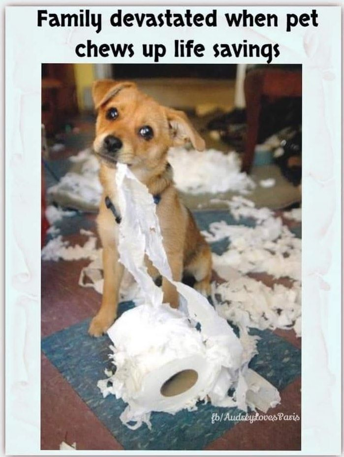 Uk Loo Roll Issues In 2020 Funny Animals Pets Hilarious