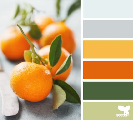 citrus hues - design seeds