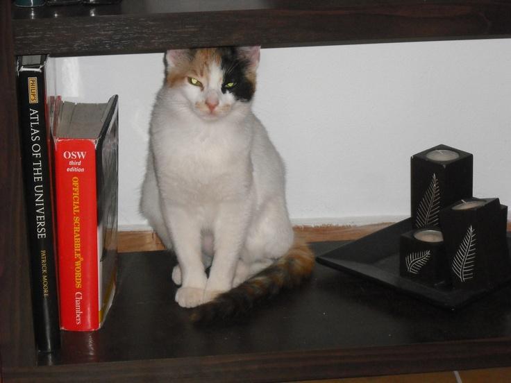 Phoebe feeling 'shelfish'