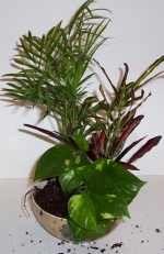 list of terrarium friendly plants