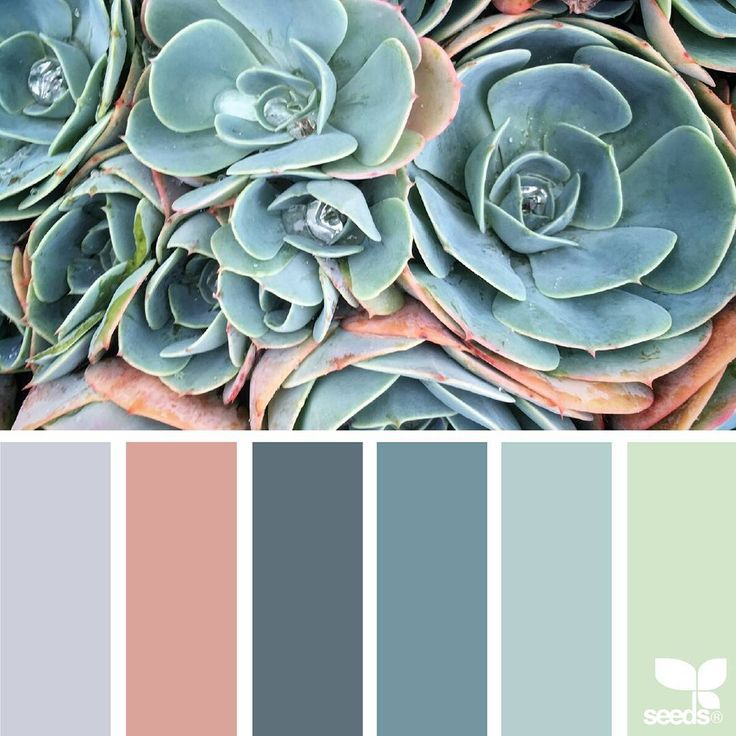 "Polubienia: 2,191, komentarze: 22 – Jessica Colaluca, Design Seeds (@designseeds) na Instagramie: ""today's inspiration image for { succulent hues } is by @lax_akl ... thank you, Erin, for another…"""