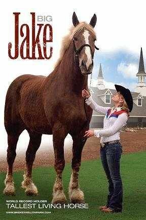 big jake a belgian draft horse was in the guinness book