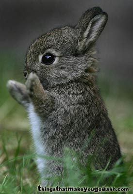 don't you just want to pick him up???: Peter O'Toole, Cute Pets, Baby Bunnies, Peter Rabbit, Baby Rabbit, Baby Animals