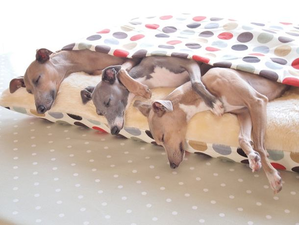 Is this the cosiest dog bed ever made? Charley Chau invites all you doggies to climb inside and get nice 'n' snug!