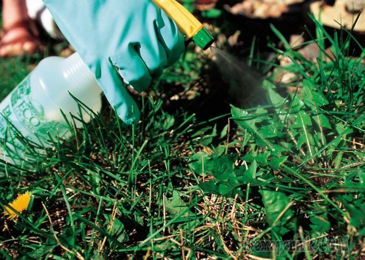 Гербициды – что это такое и для чего их применяют?