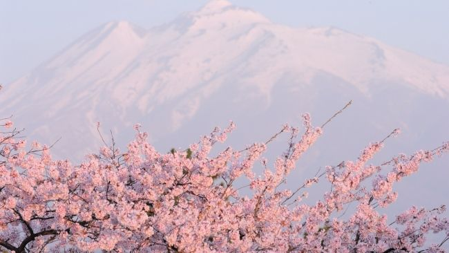 Full Hd Wallpaper Sakura Mountain Snow Japan Desktop Backgrounds Hd 1080p Pink Nature Desktop Wallpaper Art Watercolor Wallpaper Iphone