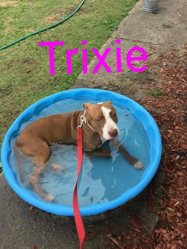 Adopt Trixie On Animals Pets Home Rescue Adoption