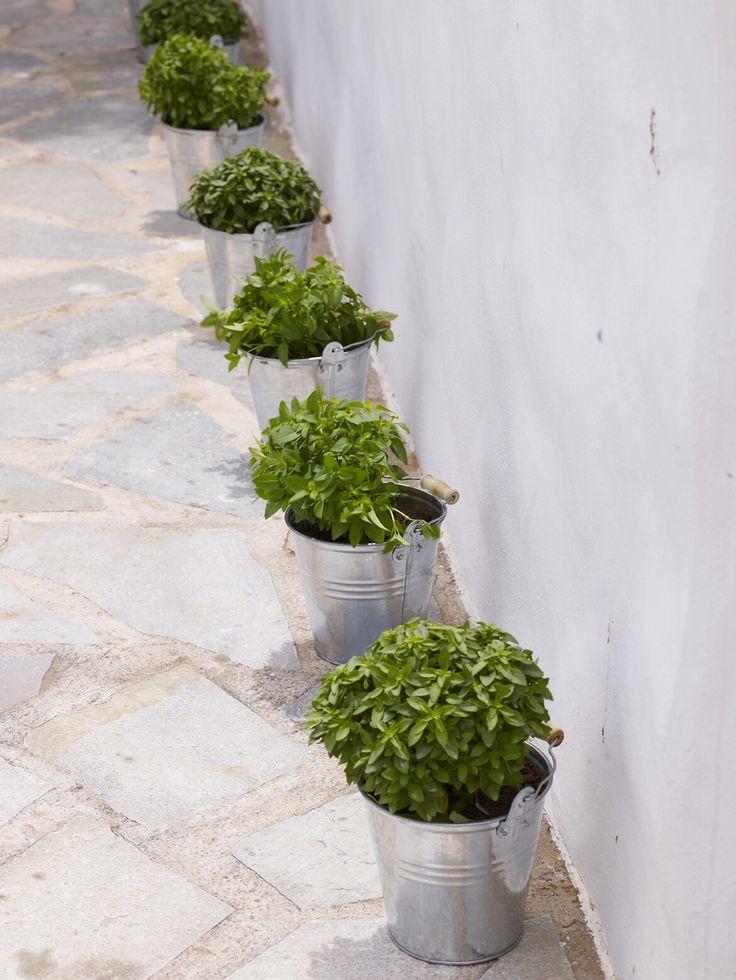 Basil plants inside metallic buckets, very Greek, very easy, very attractive!!!! http://www.instyle.gr/photo-gallery/gamos-se-nisi-aplos-ke-entiposiakos-stolismos-gia-mia-paradosiaki-teleti-stin-ekklisia/id/1/