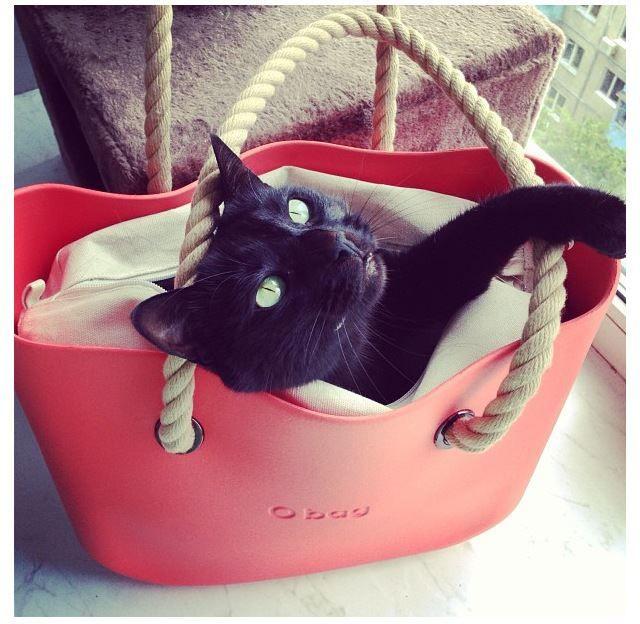 #obag #cat
