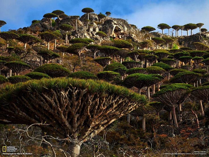 Socotra, Yemen One third of the plant life on Socotra Island is found nowhere else on planet Earth. One of the most bizarre forms of life is the dragon blood tree, which resembles an umbrella.