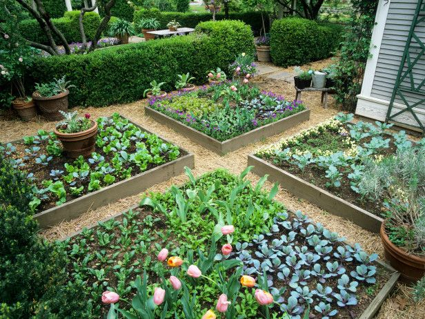 A formal garden at the urban cottage of P. Allen Smith in Little Rock, Arkansas, showcases several intensive gardening practices, including raised beds, containers and interplanting. Planting spring vegetable seeds around tulips is an especially clever idea that combines edible and ornamental gardening in one compact space.