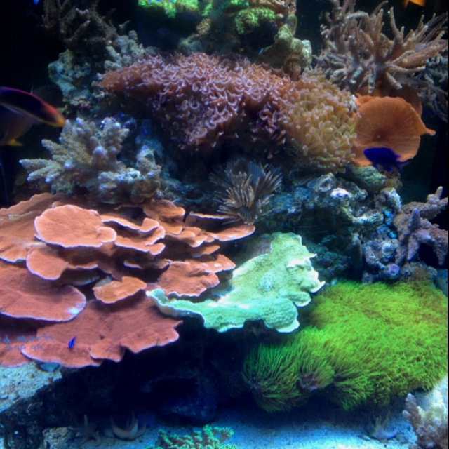 17 best images about nano salt aquariums on pinterest for Aquarium recifal nano