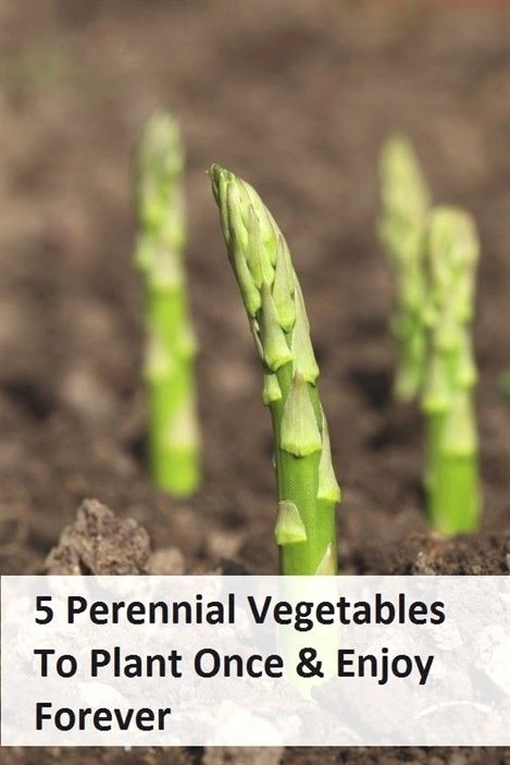 5 Perennial Veggies to Plant Once and Enjoy… Forever – Patio