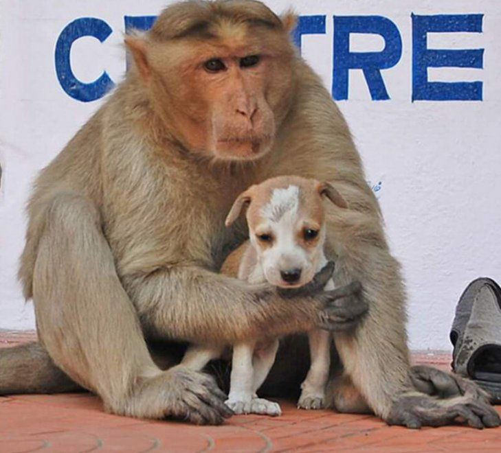 La vita da cane randagio non è semplice, soprattutto se si parla di un cucciolo ancora impreparato alla vita di strada. Fortunatamente, il piccolo cane