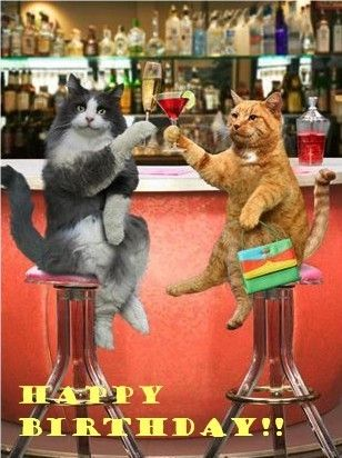 Happy Birthday Cats Drinking