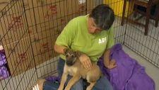 Beth Honeychurch, Animal Rescue Foundation, ARF, I