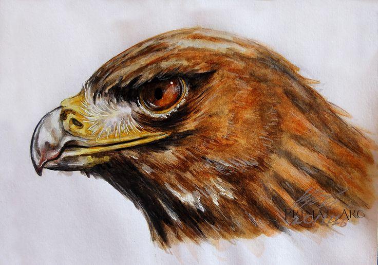 'Raptor', watercolour. www.primalarc.com