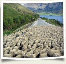 IFSA-Butler New Zealand Programs