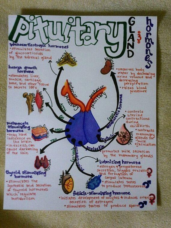 anatomy pathophysiology ii exam 1 systems study Unit 2—anatomy and physiology of organ systems page 1 unit 2: anatomy and physiology of organ 1 study of the anatomy and physiology of the body generally.