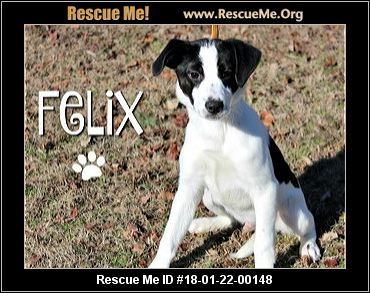 ― Arkansas Border Collie Rescue ― ADOPTIONS ― RescueMe.Org