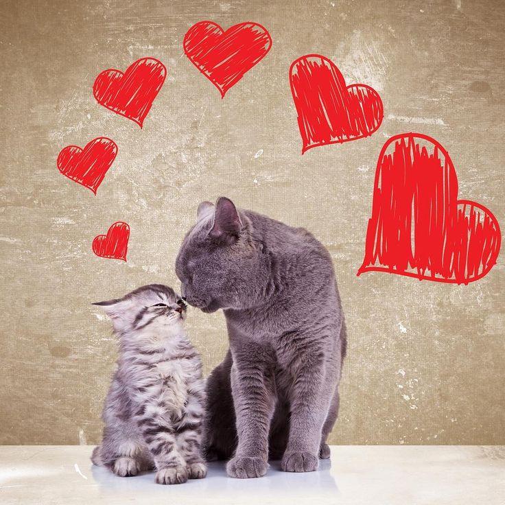 Ook jouw huisdier verdient een aangepaste en geschikte verzorging. Bij PharmaMarket vind je een uitgebreid aanbod aan verzorgingsproducten en supplementen. Zo zorg je ervoor dat je hond, kat, paard of sportduif in topconditie blijft!   http://www.pharmamarket.be/be_nl/dieren.html?___store=be_nl