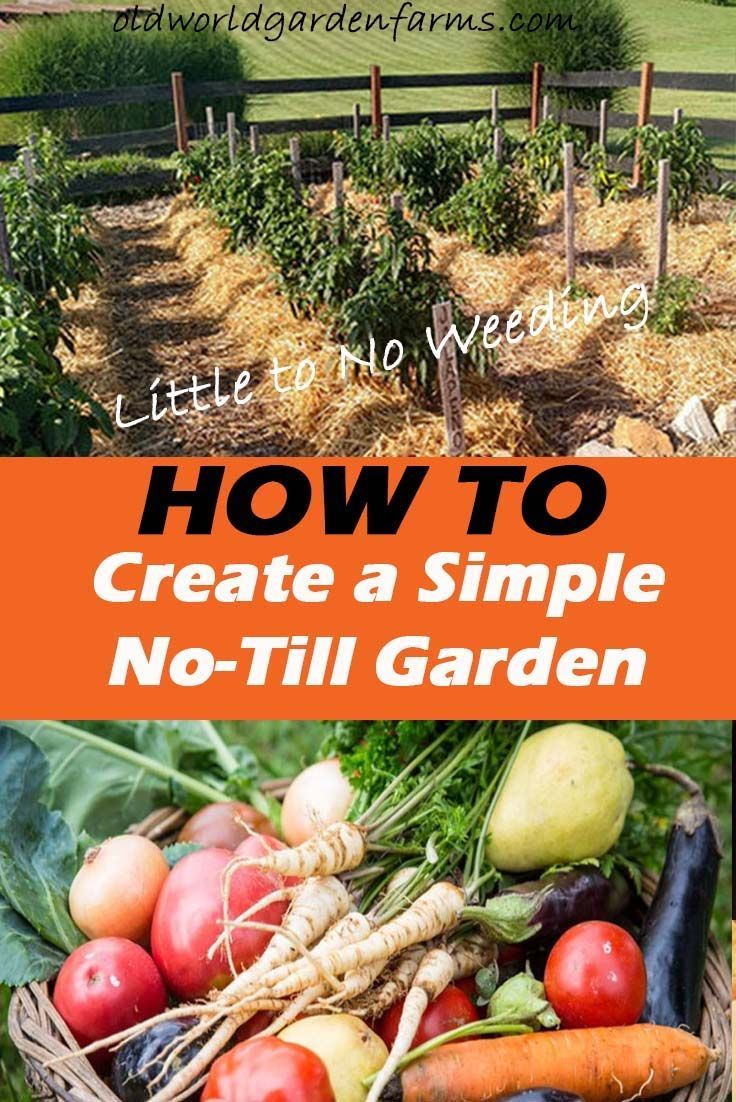 How To Create A Simple No-Till Garden With Little Weeding – Forever! – Garden Advice