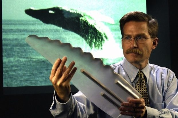 """By adding humpback whale flipper-inspired tubercles (bumps) to the leading edge of each turbine blade, Naval Academy researchers found that they were able to extract more energy from low-speed waves--without hurting performance when waves rushed in at high speeds."""""""
