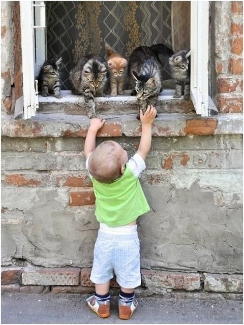 """not funny, just adorable, but I don't have a """"so cute"""" board, so it'll just have to live here."""