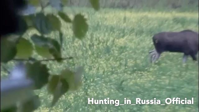 Охота на лося с вышки 🦌 #охота#охотавроссии#охота2016#охотаналося#hunt#hunters#hunting#hunter#caza#chasse#moose#moosehunt#moosehunting