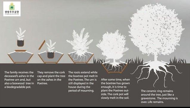 [광릉추모공원] 친환경적인 추모공원 그리고 특별한 수목장 나무 poetree funeral urn : 네이버 블로그