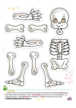 a halloween skeleton at the same time they learn th parts of the body - ESL worksheets