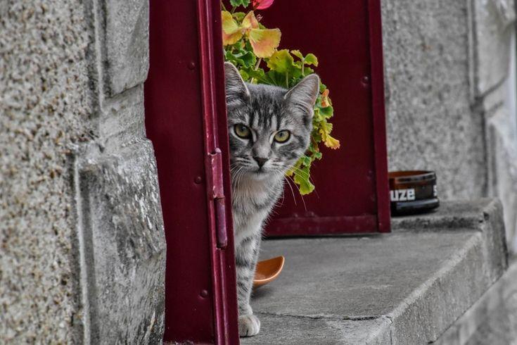 Chaton à la fenêtre d'une maison