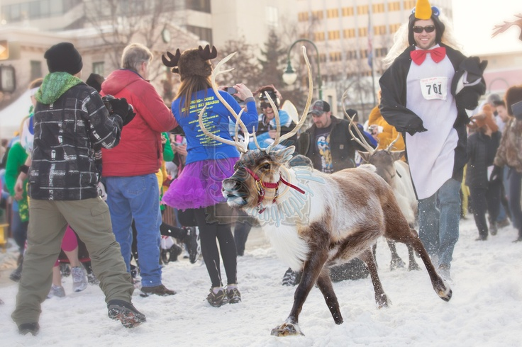 Fur Rondy   Running of the Reindeer  Crystallyzed Photography  www.crystallyzed.com