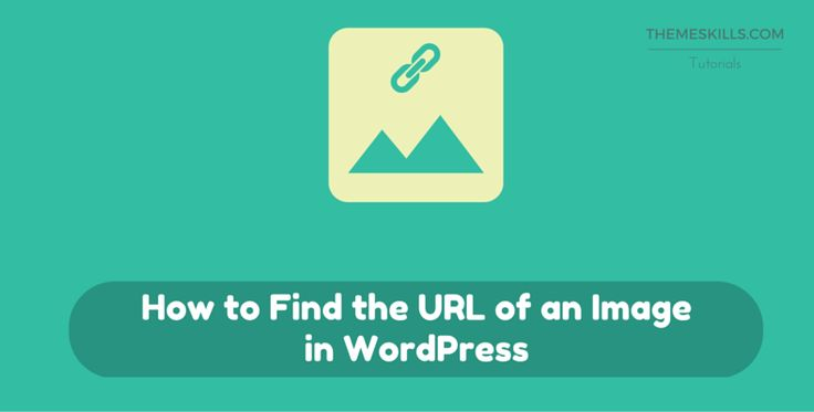 How to Find the URL of an Image in WordPress1