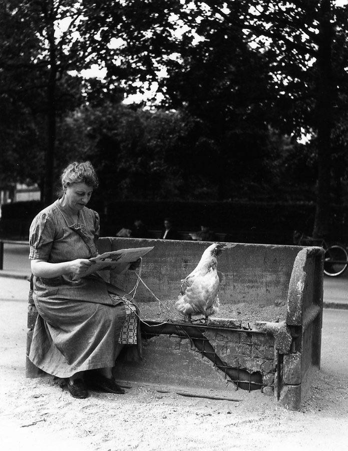 La poule en laisse © Robert Doisneau